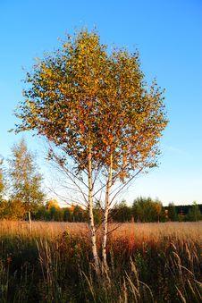 Free Autumn Royalty Free Stock Photos - 16407838