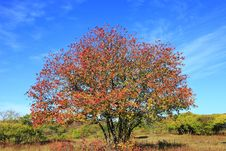 The Tree In Autumn Stock Image