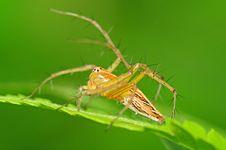 Free Lynx Spider Stock Image - 16409151