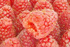 Free Raspberries Stock Photos - 16409583