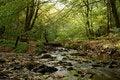 Free A Fall Stream Stock Photo - 16411810