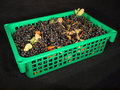 Free Black Berry In The Green Box Stock Photography - 16413102