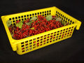 Free Red Berry In The Yellow  Box Royalty Free Stock Image - 16413106