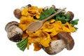 Free Mushrooms Royalty Free Stock Images - 16419239