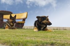 Free Dogs In The Park And Bench With Table Stock Images - 16410024
