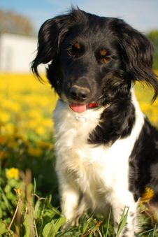 Dog In The Meadow Stock Photography