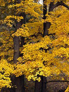 Free Autumn In New England Royalty Free Stock Photo - 16411585
