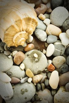 Free Seashore Still Life Royalty Free Stock Image - 16411586