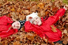 Free Resting In Leaves Stock Photography - 16414062