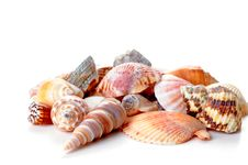 Free Shells Royalty Free Stock Images - 16414699