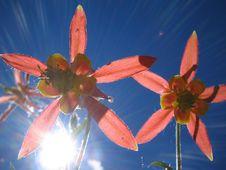 Free Sun Shines Through Royalty Free Stock Images - 16415109