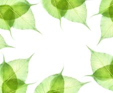 Free Leaves Isolated On White Stock Images - 16415614