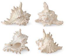 Free Sea Shells Stock Photo - 16415900