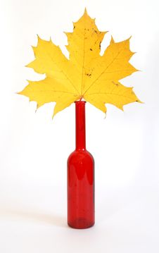 Free Maple Leaves In Autumn Color Glass Vase Stock Image - 16416161