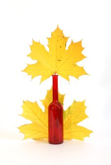 Free Maple Leaves In Autumn Color Glass Vase Stock Photo - 16416180