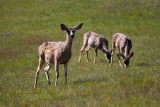 Free Staring Deer Stock Image - 16417171