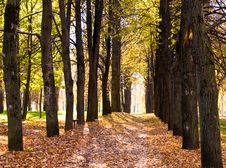 Free Autumn Avenue Stock Images - 16418304