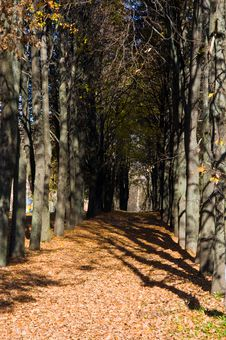 Free Autumn Avenue Royalty Free Stock Photo - 16418305
