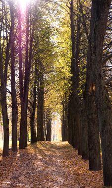 Free Autumn Avenue Stock Photo - 16418310