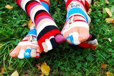 Socks In Autumn. Stock Photography
