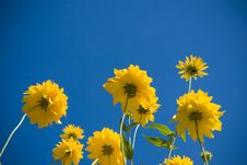 Free Yellow Flowers Stock Images - 16418944
