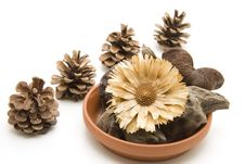 Free Shells With Dry Flower Stock Photography - 16419182