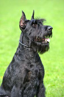 Free Dog Stock Images - 16419324
