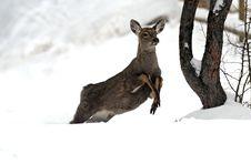 Free Elk Stock Photo - 16419330