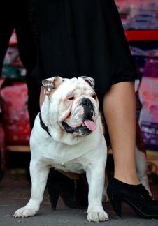 Free Dog Stock Image - 16419351