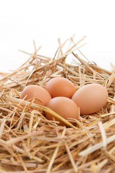 Free Nest Of Brown Eggs Royalty Free Stock Photo - 16419595