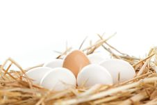 Free Nest Of Brown And White Eggs Stock Images - 16419684