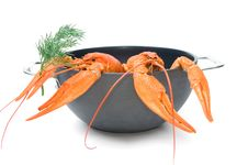 Free Crayfish Royalty Free Stock Photos - 16420078