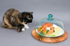 Free Crayfish And Cat Stock Photos - 16420113