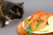 Free Crayfish And Cat Royalty Free Stock Photos - 16420138