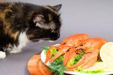Free Crayfish And Cat Stock Photo - 16420140