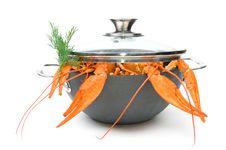 Free Crayfish Royalty Free Stock Photos - 16420168