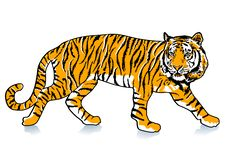 Sneak Tiger Stock Photography
