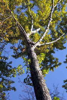 Free Autumn Tree Against The Blue Sky Stock Photos - 16421063