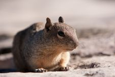 Free Squirrel Posing Royalty Free Stock Photography - 16421157