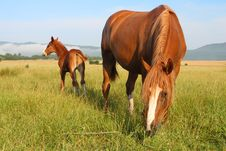 Free Horses Royalty Free Stock Photography - 16422217