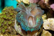 Free Crocea Clam Stock Images - 16423914