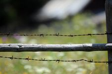 Barbwire Royalty Free Stock Photography