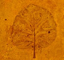 Free The Leaf Imprint Stock Images - 16426474