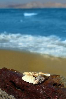 Free Sea Shell, Ocean, Beach Royalty Free Stock Photo - 16426915