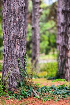 Forest With Lot Of Copy Space Stock Photography