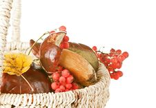 Free Basket With Mushroom, Berry And Leaf Stock Photography - 16427732