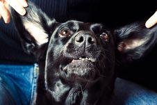 Free Expressive Dog Stock Photos - 16428243
