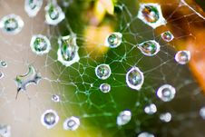 Free Morning Dew On Spider Web Stock Photos - 16428733