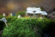 Free Autumn Mushrooms Royalty Free Stock Photo - 16428955