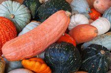Free Colorful Pumpkins Stock Image - 16428991